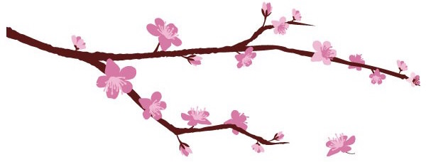 branche-cerisier-en-fleurs