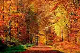 6a3b247068e672f5924cd69488611455dee7fab8-saison-periode-automne-nulle-photos-image19-thumb.jpg